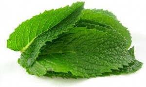 folhas de hortelã tratar acne