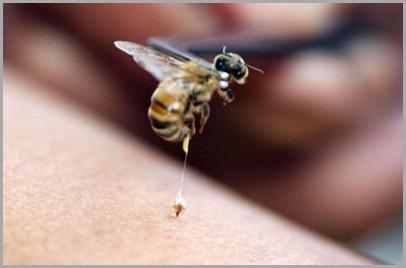tratar picada de abelha